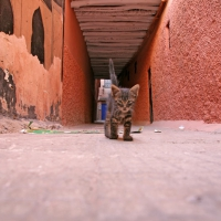 Katze in Marrakech