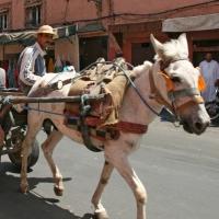 Eselkarren - Marokko