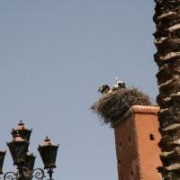 Rundfahrt Marrakesch
