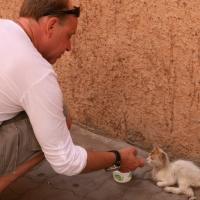 Katze in Marrakech