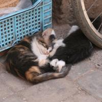 Katzen in den Suqs