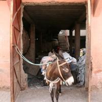 Esel in der Gerberei