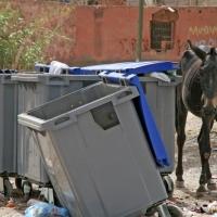 Pferd an Mülltonnen