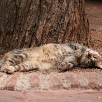 Katze im Jardin Majorelle