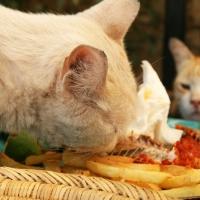 Katze in Taghazout
