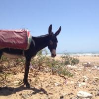 Esel in Sidi Kaouiki
