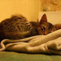 Katze in Sidi Kaouiki