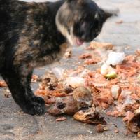 Katze in Essaouira