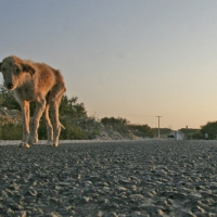 Hund auf dem Weg nach Sidi Kaouiki